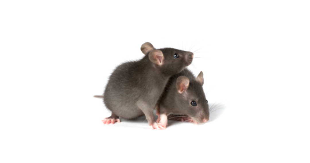 Home Security Tips on Preventing Mice in Your Home